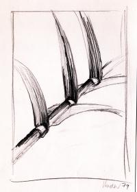 Bambus. Bleistift. 1979